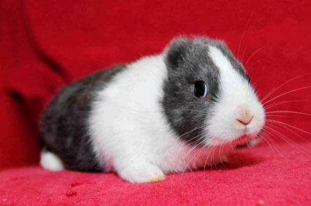 earless-bunny.jpg
