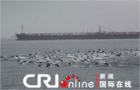 15lede_dolphins.480.jpg