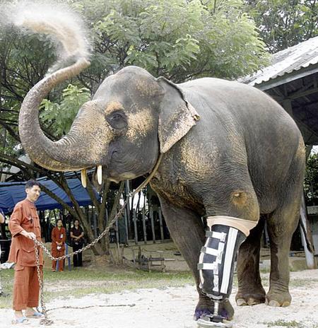 500x_ElephantLimb.jpg