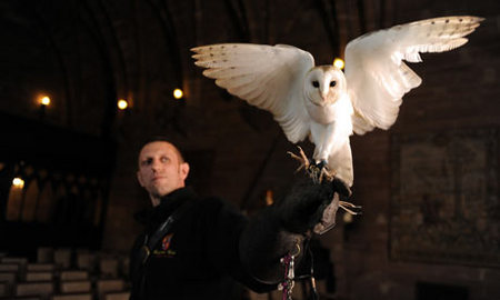 Ollie-owl-001.jpg
