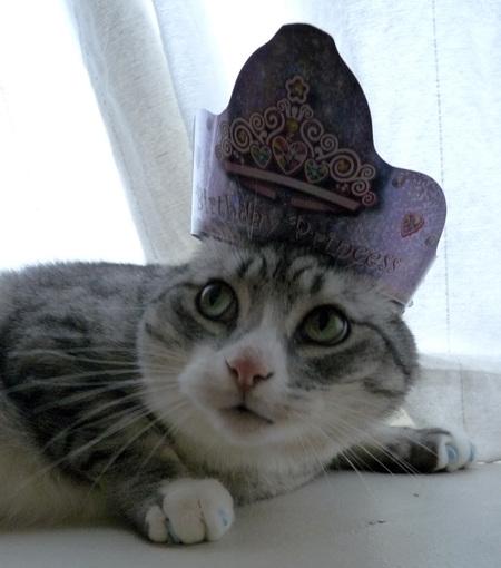 anderson-pooper-birthday-tiara.jpg