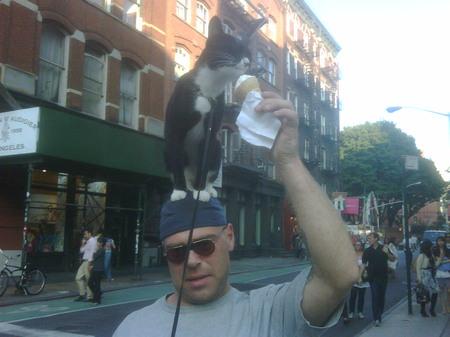 cat-ice-cream-new-york.jpg