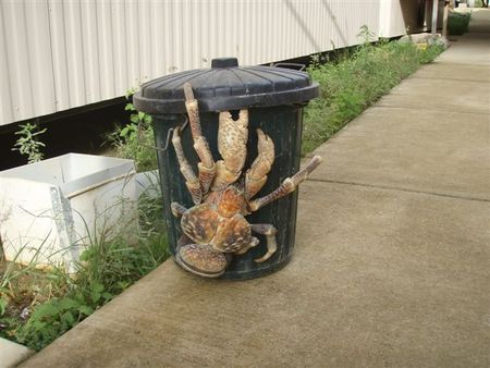 coconut_crab.jpg