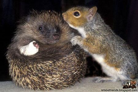 hedgehog-squirrel.jpg