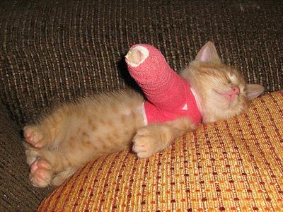 kitten-cast.jpg