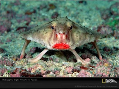 lady-crab.jpg