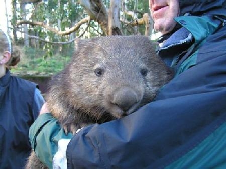 nugget-the-wombat.jpg
