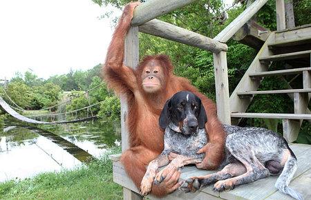 orangutan-dog-02.jpg