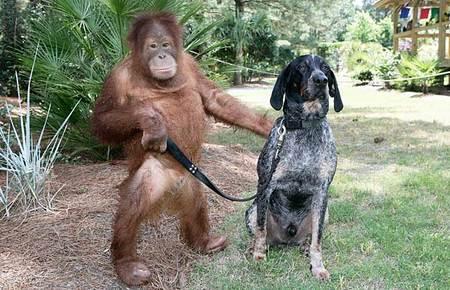 orangutan-dog-03.jpg