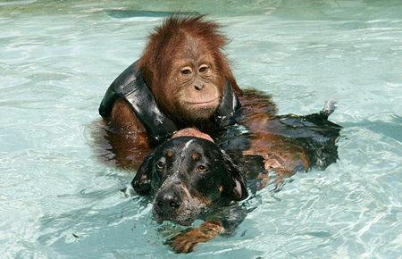 orangutan-dog-04.jpg