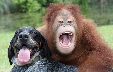 orangutan-dog-05.jpg