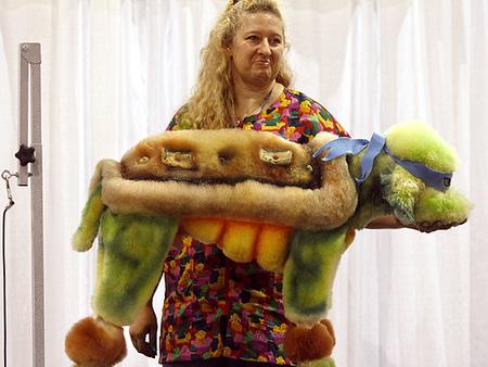 poodle-ninja-turtle.jpg