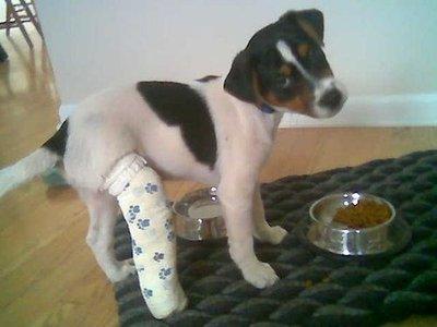 puppy-cast.jpg