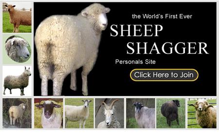 sheepshagger.png
