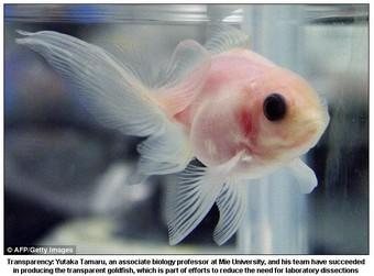transparentfish.jpg