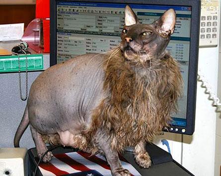 uggs-cat.jpg