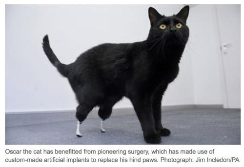 bioniccat.jpg
