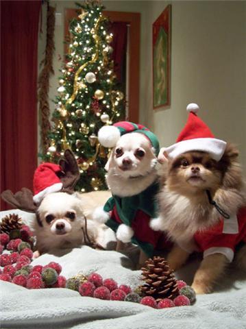 boyschristmas.jpg