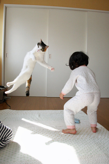cat-baby-fight.jpg