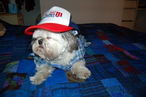 hipster-puppy-01.jpg