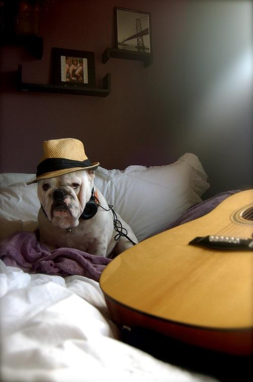 hipster-puppy-03.jpg