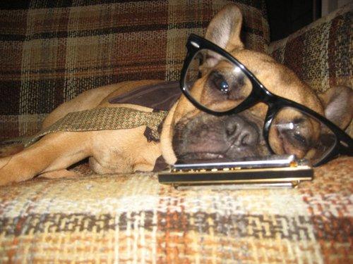 hipster-puppy-04.jpg