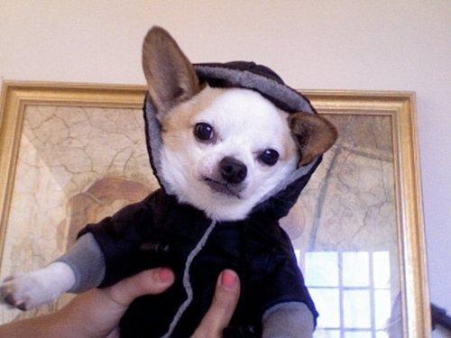 hipster-puppy-05.jpg