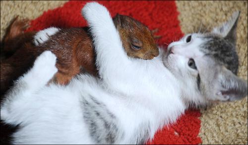 kittysquirrel.jpg