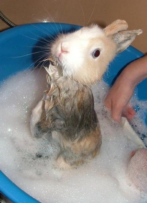 rabbitbath.jpg