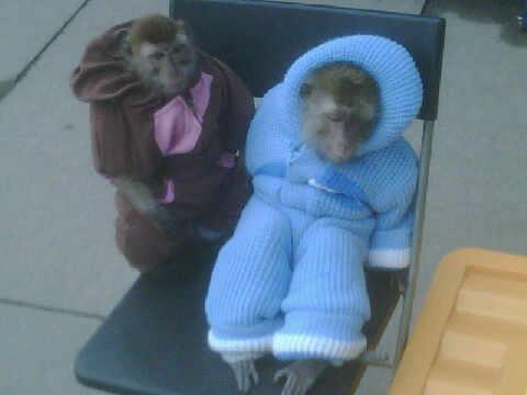 russian-monkeys-jumpsuits.jpg