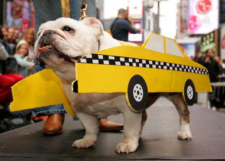 Taxi dog.jpg
