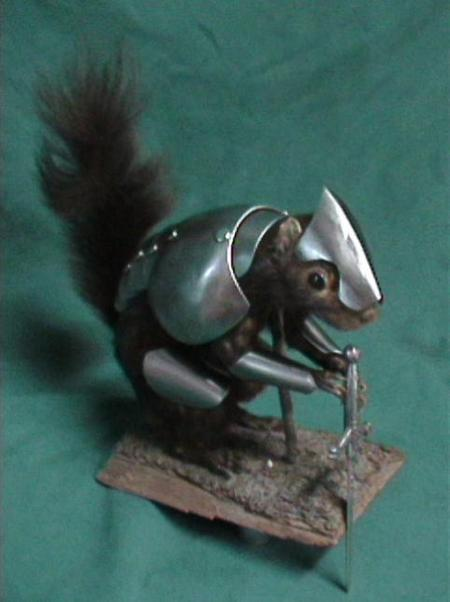 War_Squirrel_elite_2-482x645.jpg