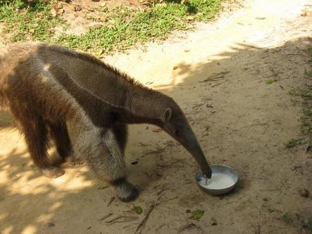 anteater_mid.jpg