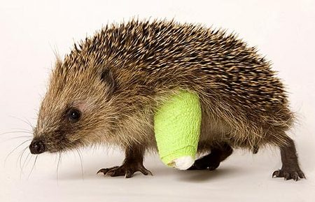 baby-hedgehog-broken-02.jpg