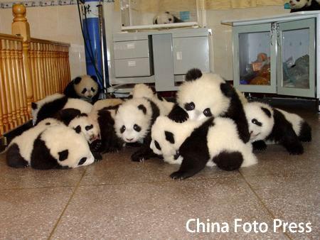 baby-panda-pile.jpg