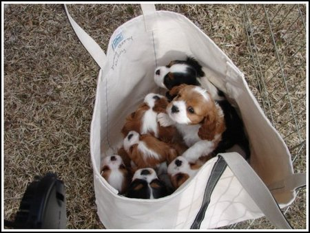 bag-of-puppies.jpg