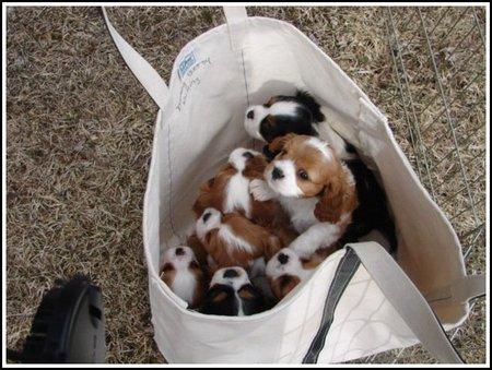 bag-of-puppies.jpg