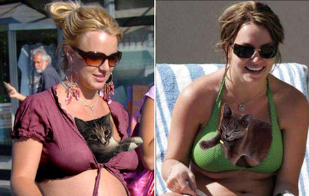 britney-spears-cat-boobs.jpg
