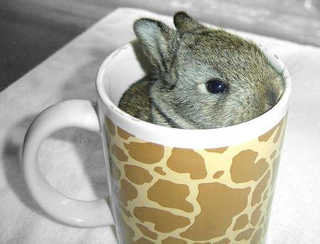 bunny-mug.jpg