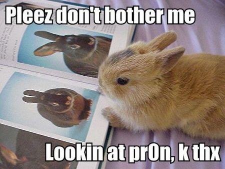 bunny-porn.jpg