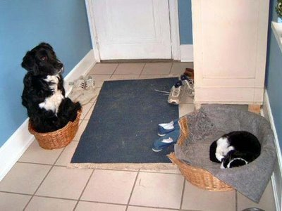 cat-dog-basket.jpg