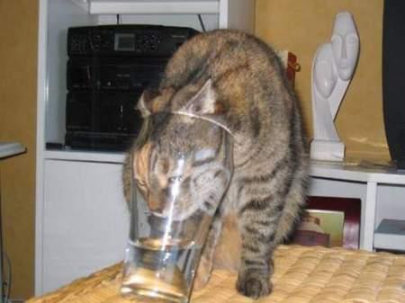cat-glass.jpg