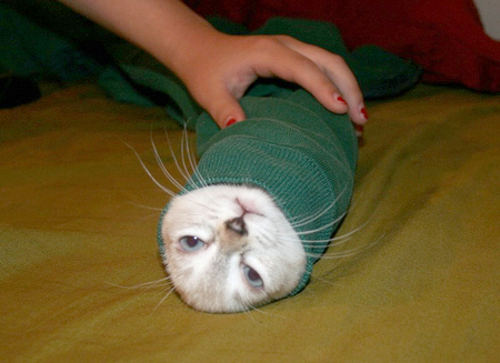 cat-in-a-sock.jpg