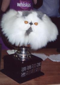 cat-trophy.JPG