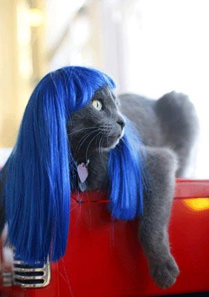 cat-wig-01.jpg