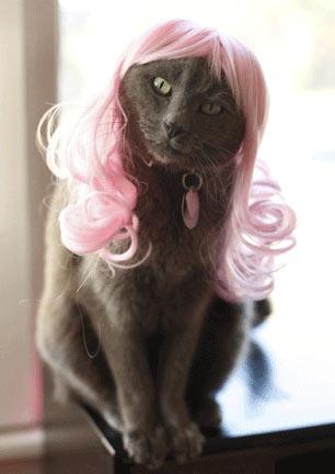 cat-wig-02.jpg