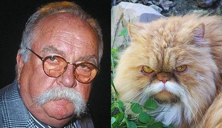 cat-wilford-brimley.jpg