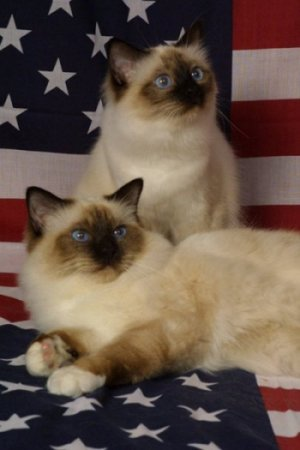 cats-flag.jpg