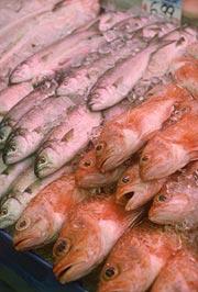dead-fish.jpg