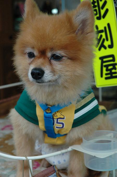 diaper dog.jpg